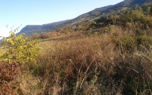 JAKUB PIKUL - Jesienna przyroda image
