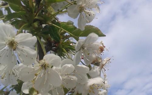 """""""Kwiaty w chmurach"""" - Gabriela Pastuła image"""