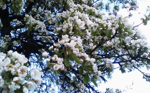 """""""Kwitnące drzewo"""" - Gabriela Kajmowicz image"""