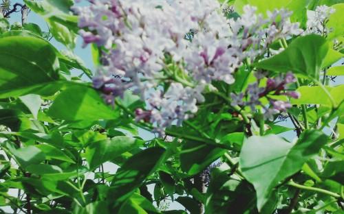 """""""Wiosna w pełni"""" - Julia Sierżęga   image"""