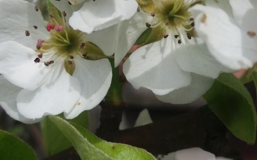 """""""Zbieranie nektaru"""" - Natalia Fudali  image"""