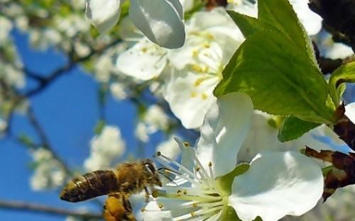 """""""Pracowita pszczółka"""" - Anna Barnat  image"""
