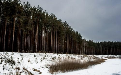Jonatan Wyczałek - Las w Mielcu image