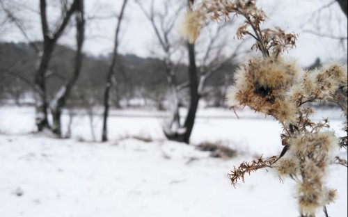 Wiktoria Klepacka - Zimowa polana image