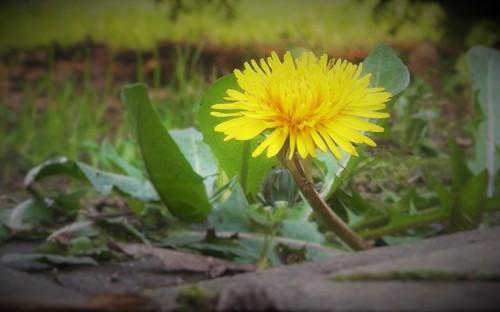 """""""Wiosenny kwiat""""- Maciej Leja    image"""